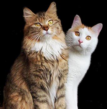 catbt
