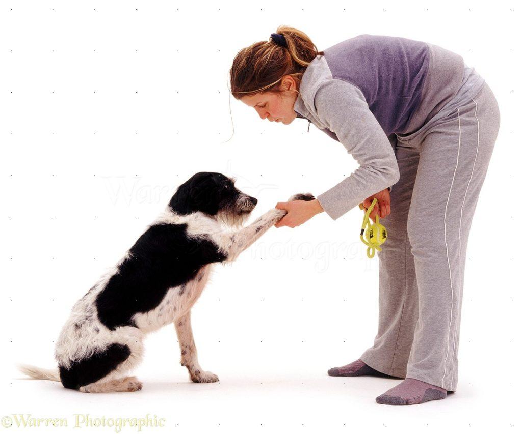 Udomiti, Veterinarska ambulanta Diamond pet, Novi Sad, veterinar, dezurni veterinar, izlazak na teren, psi, macke, ljubimci, hitne intervencije