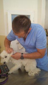 Obeležavanje, pasoš, Veterinarska ambulanta Diamond pet, Detelinara, Novi Sad, dezurni veterinar, hitne intervencije, izlazak na teren, psi, macke, veterinar